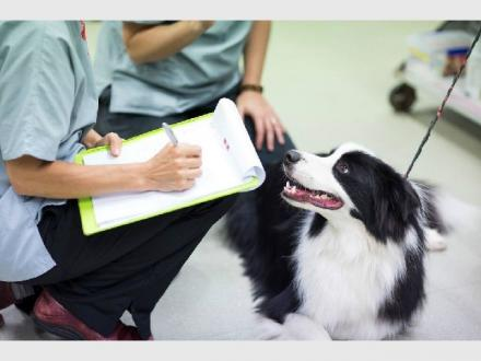 Brisbane Veterinary Emergency & Critical Care Services (BVECCS)