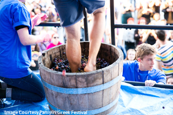 Traditional grape stomping