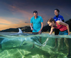 Dolphin Feeding at Tangalooma